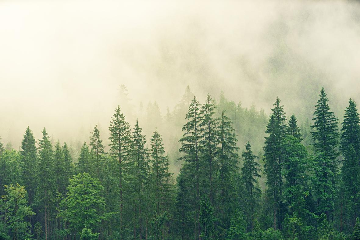 fog-3622519_liten